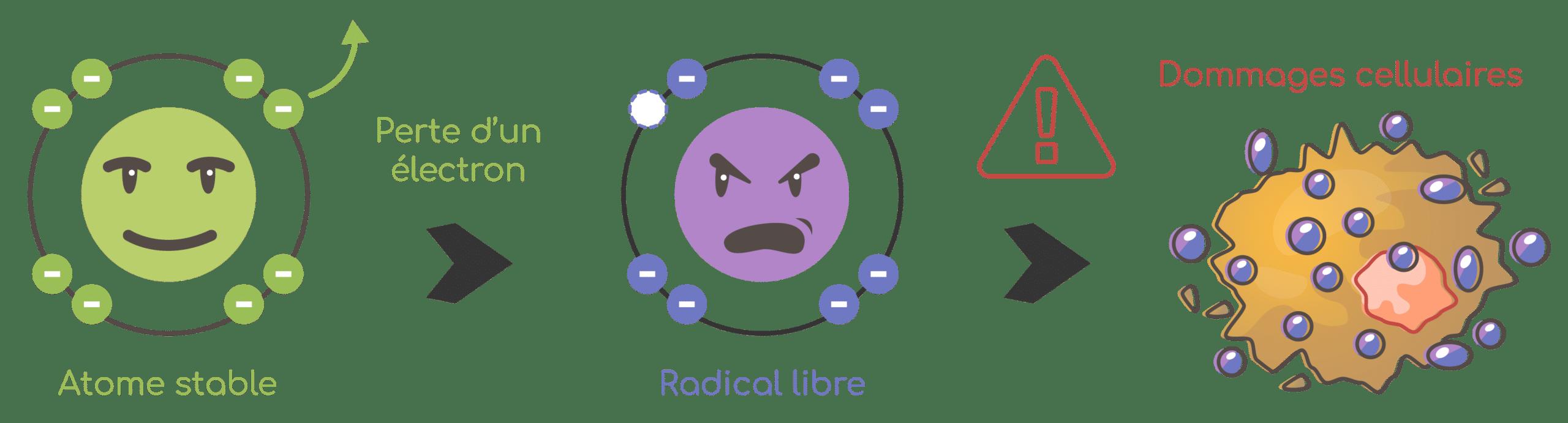 Dommages causés par les radicaux libres