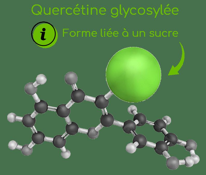 Caractéristiques et structure de la quercétine glycosylée