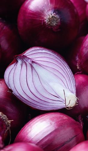 L'oignon rouge est une très bonne source de quercétine nutraceutique